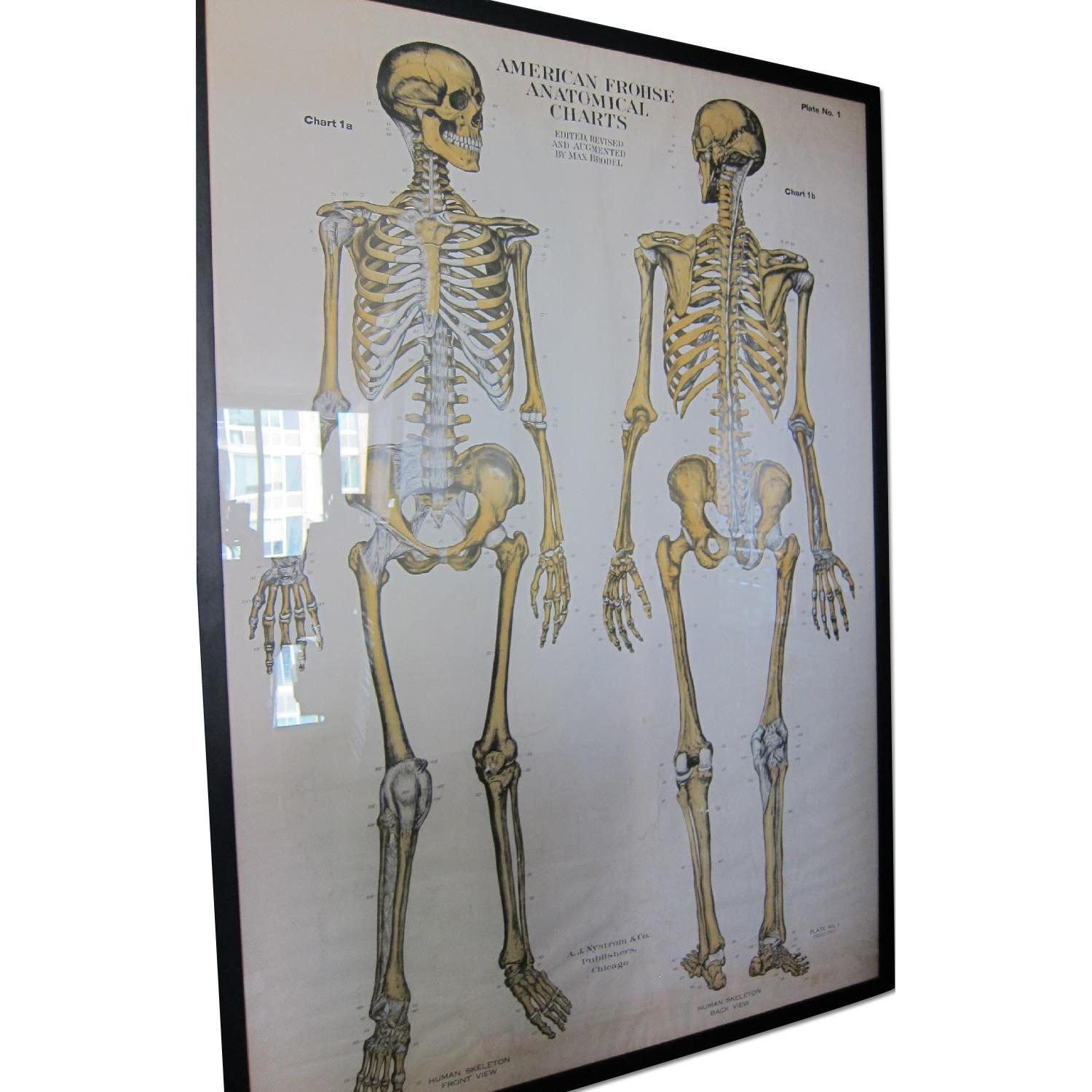 Vintage Medical Anatomy Skeleton Poster - AptDeco
