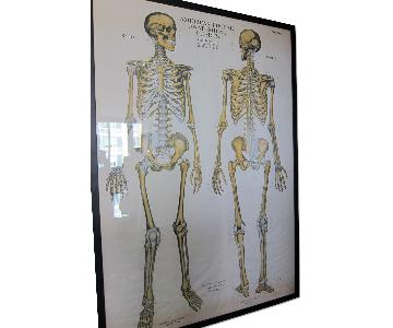 Vintage Medical Anatomy Skeleton Poster