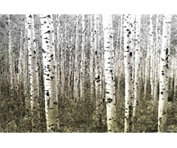 Taj Parvez Wall Canvas - Aspen Highlands