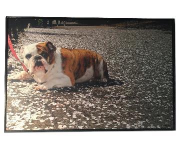 Devin Delano - Bulldog in Central Park