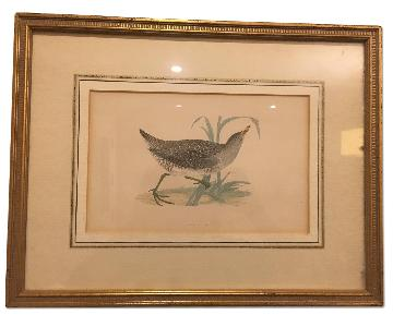 Antique Bird & Flower Drawings