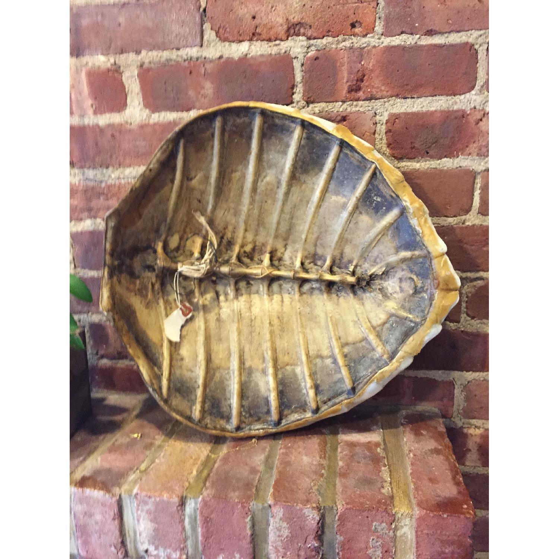 Sea Turtle - image-1