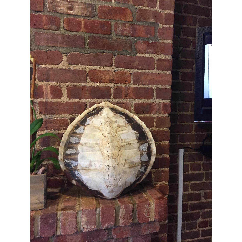 Sea Turtle - image-2