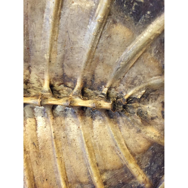 Sea Turtle - image-4