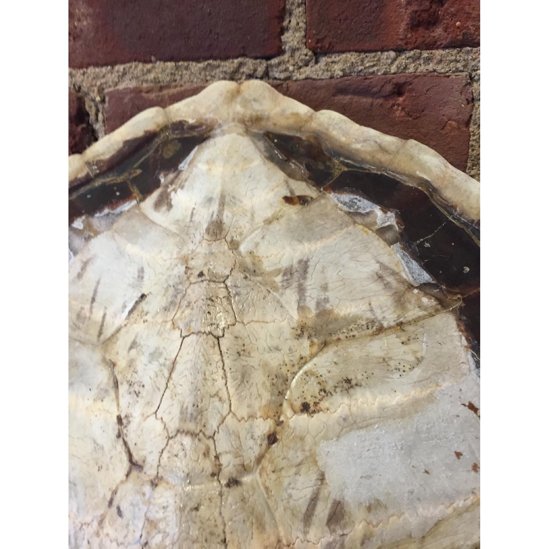 Sea Turtle - image-5