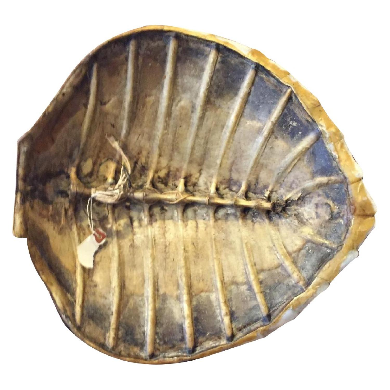 Sea Turtle - image-7