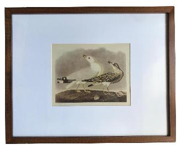 West Elm Framed Audubon Print