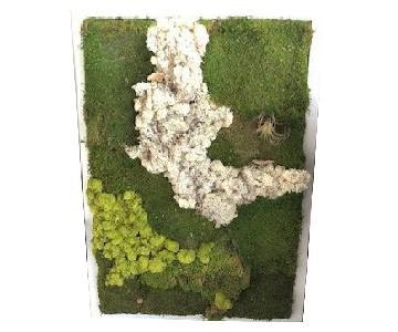 Moss/Plant Wall Art