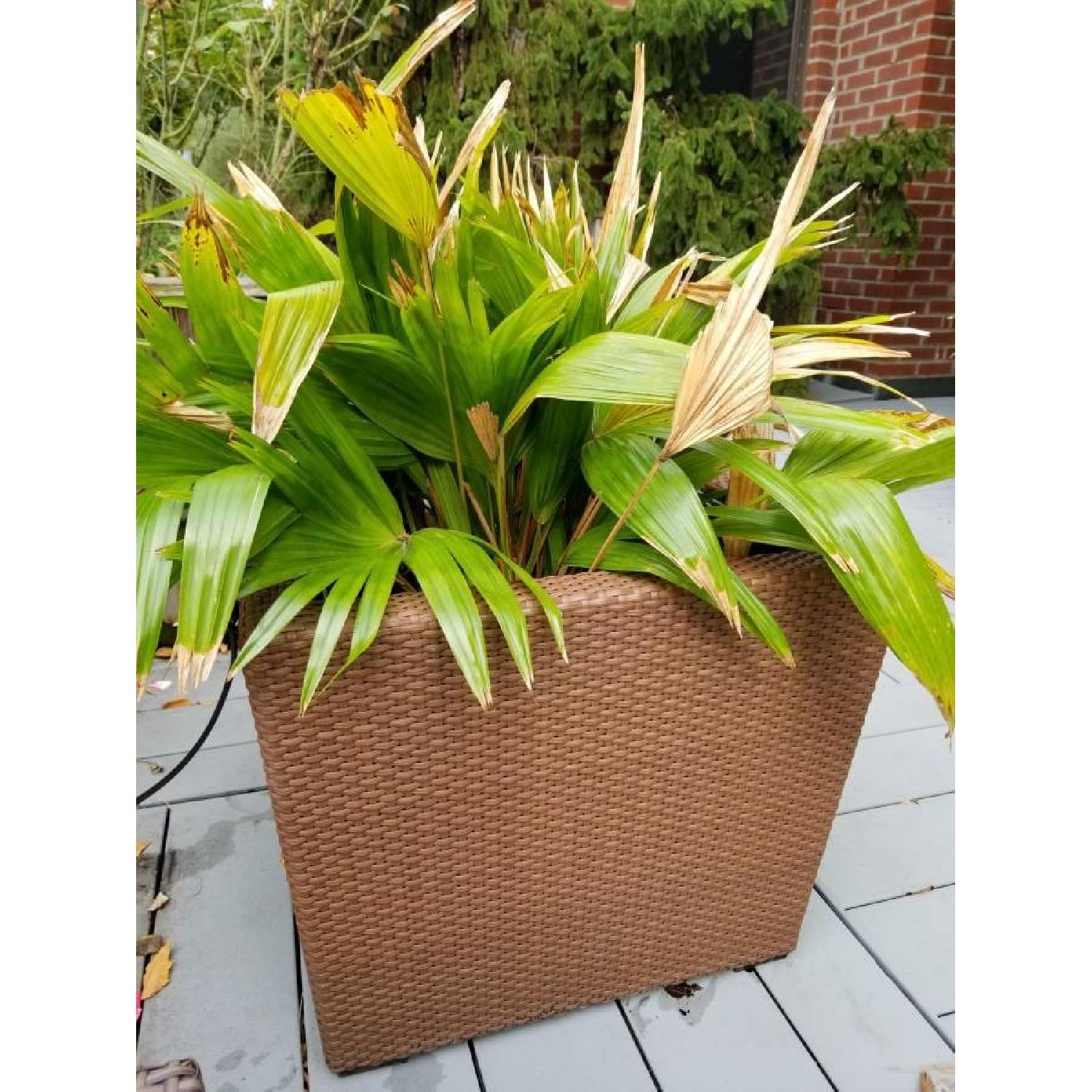 Dedon Planters Square Low Planter