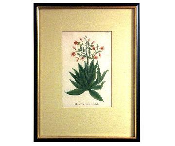 Johann Wilhelm Weinmann: Aloe Serrata 1745 Mezzotint Plate