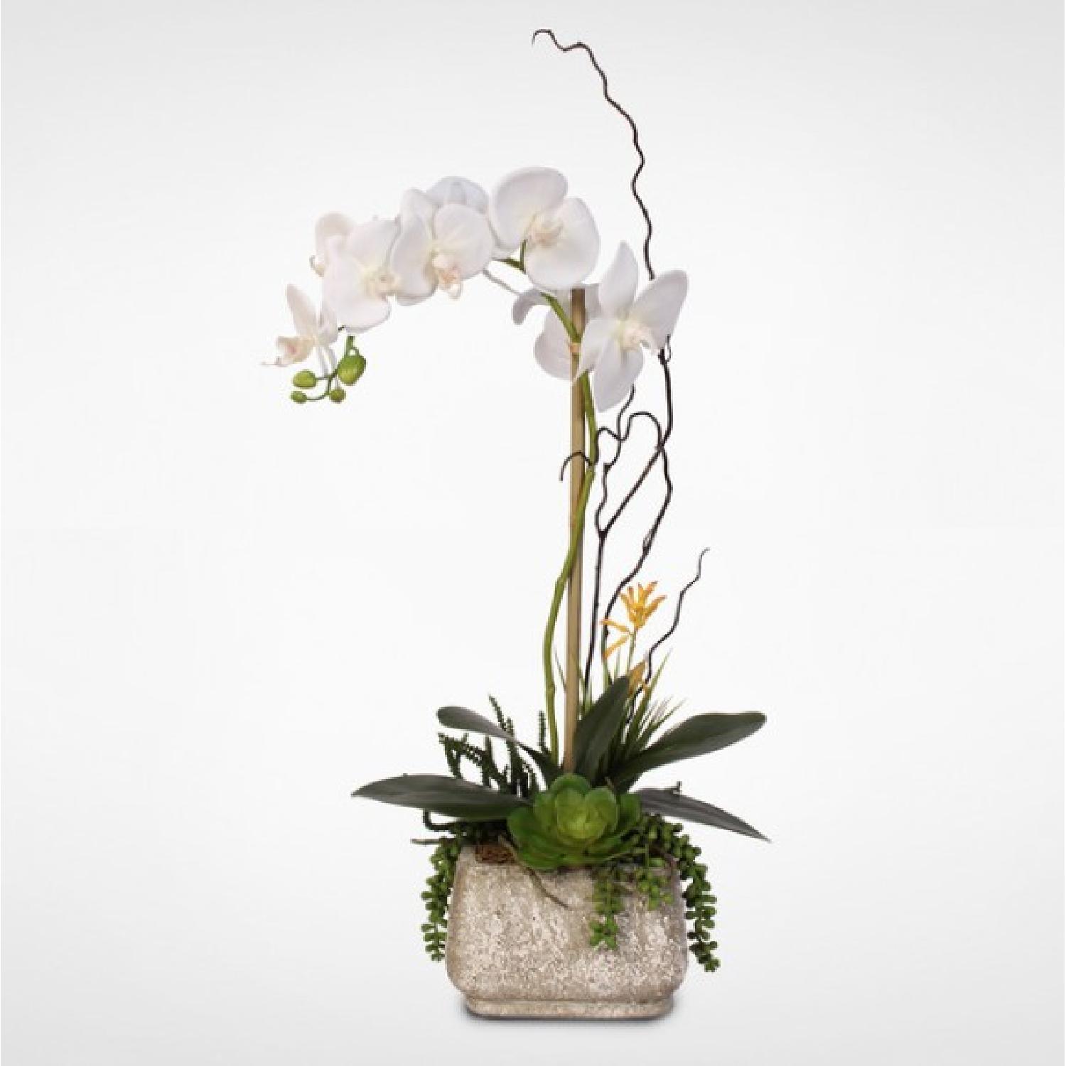 Phalaenopsis Silk Orchid w/ Succulents in Cement Planter-0