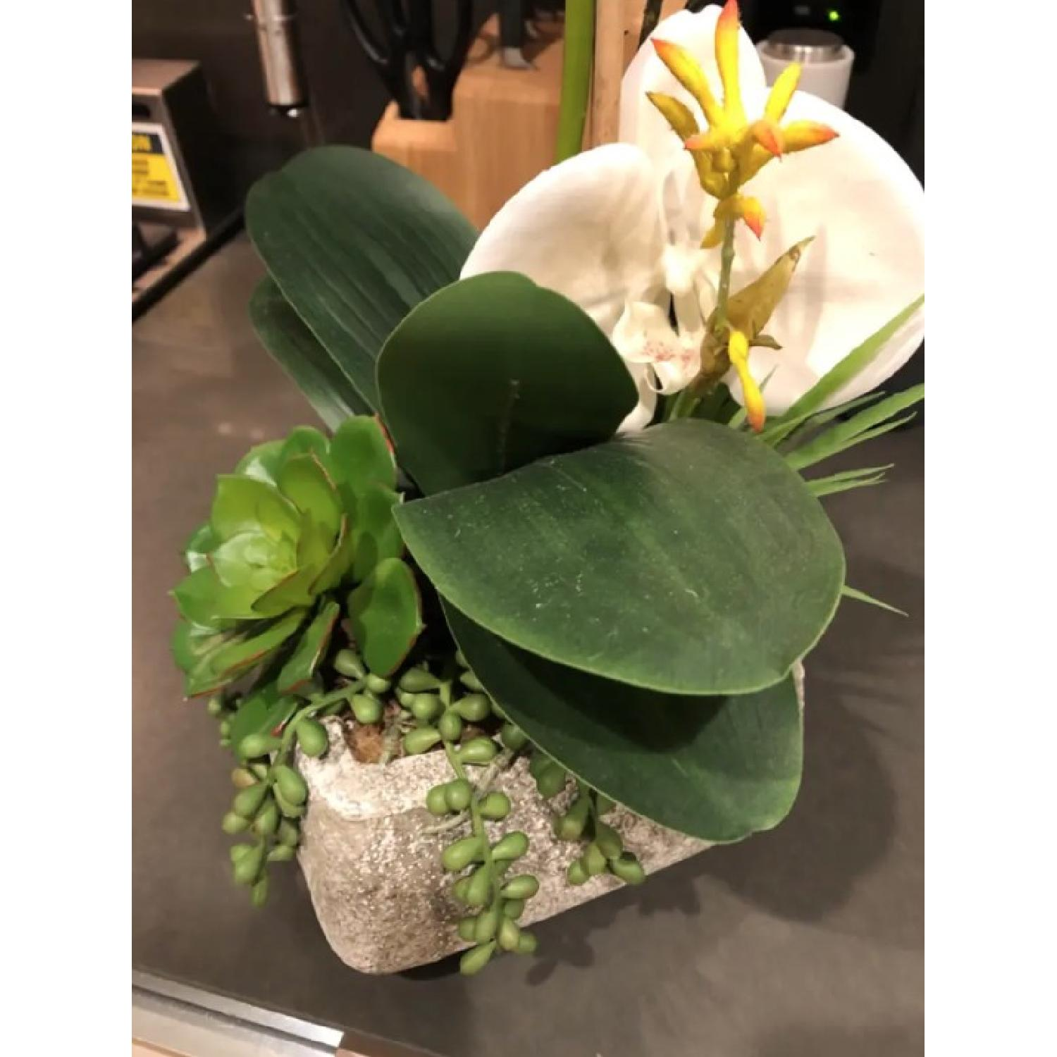 Phalaenopsis Silk Orchid w/ Succulents in Cement Planter-2
