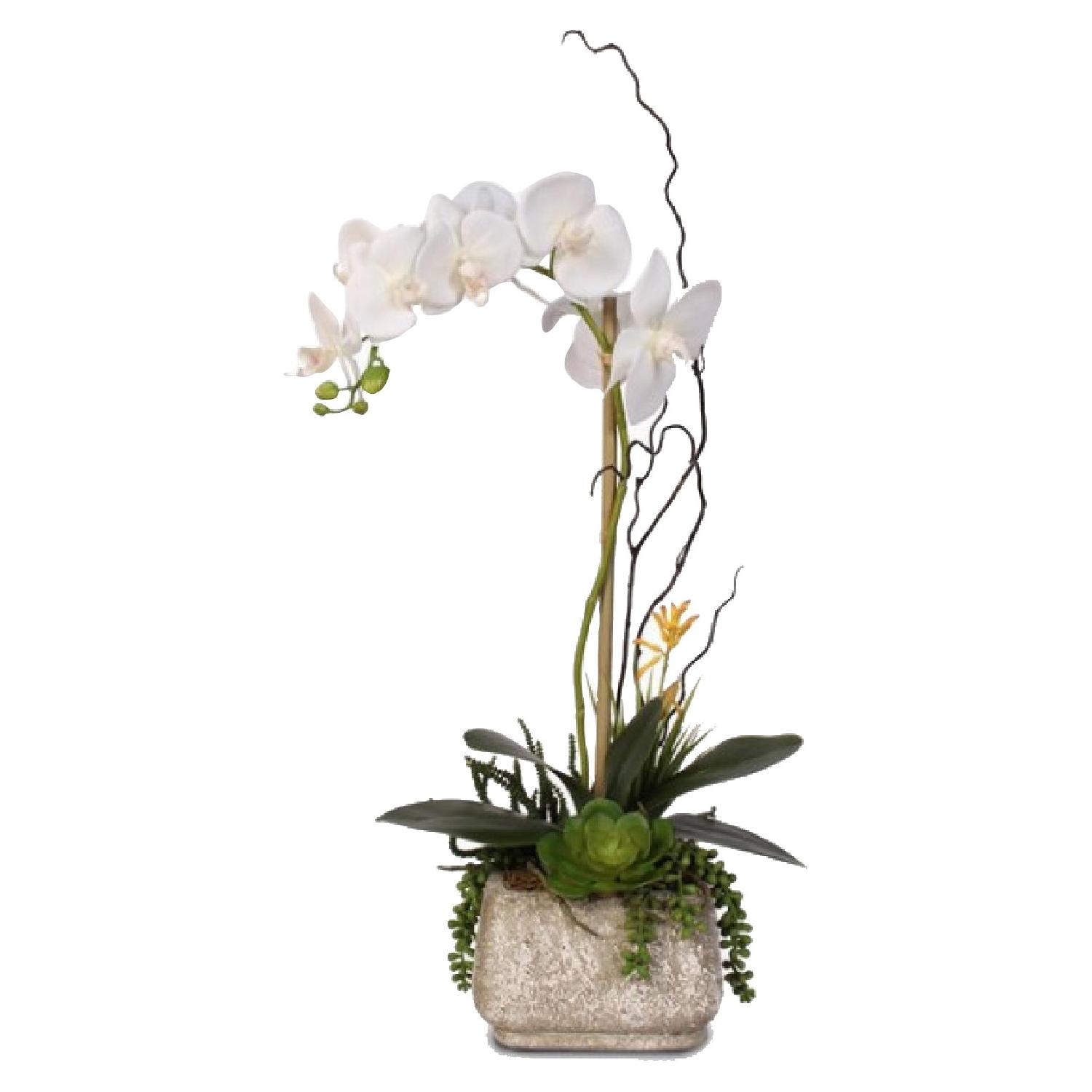 Phalaenopsis Silk Orchid w/ Succulents in Cement Planter