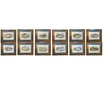 A.F. Lydon Framed & Matted Antique Fish Prints