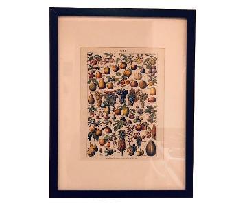 Framed French Prints