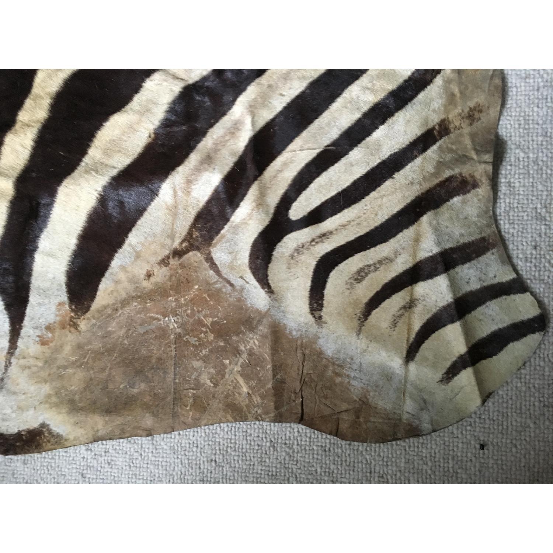 Zebra Hide Trophy Rug from Africa - image-5