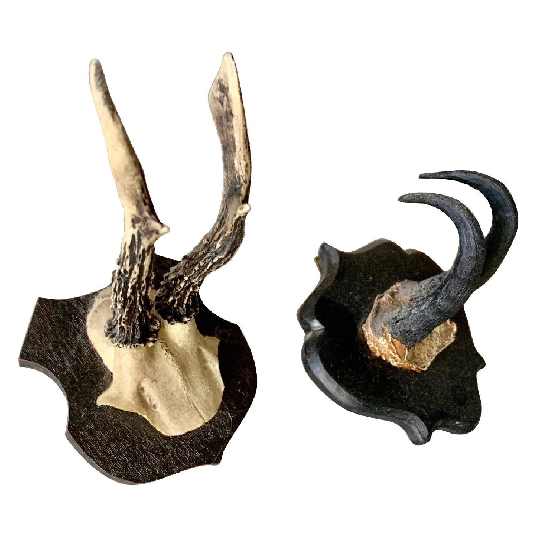Resin Antlers-4