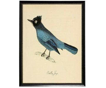 Stellar Jay Giclee Framed Bird Print