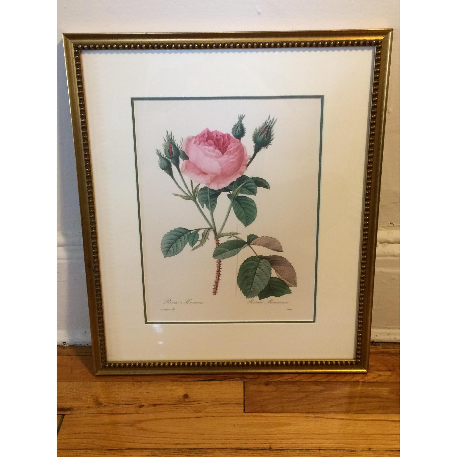 Pierre Joseph Redoute Framed Floral Lithograph - image-2