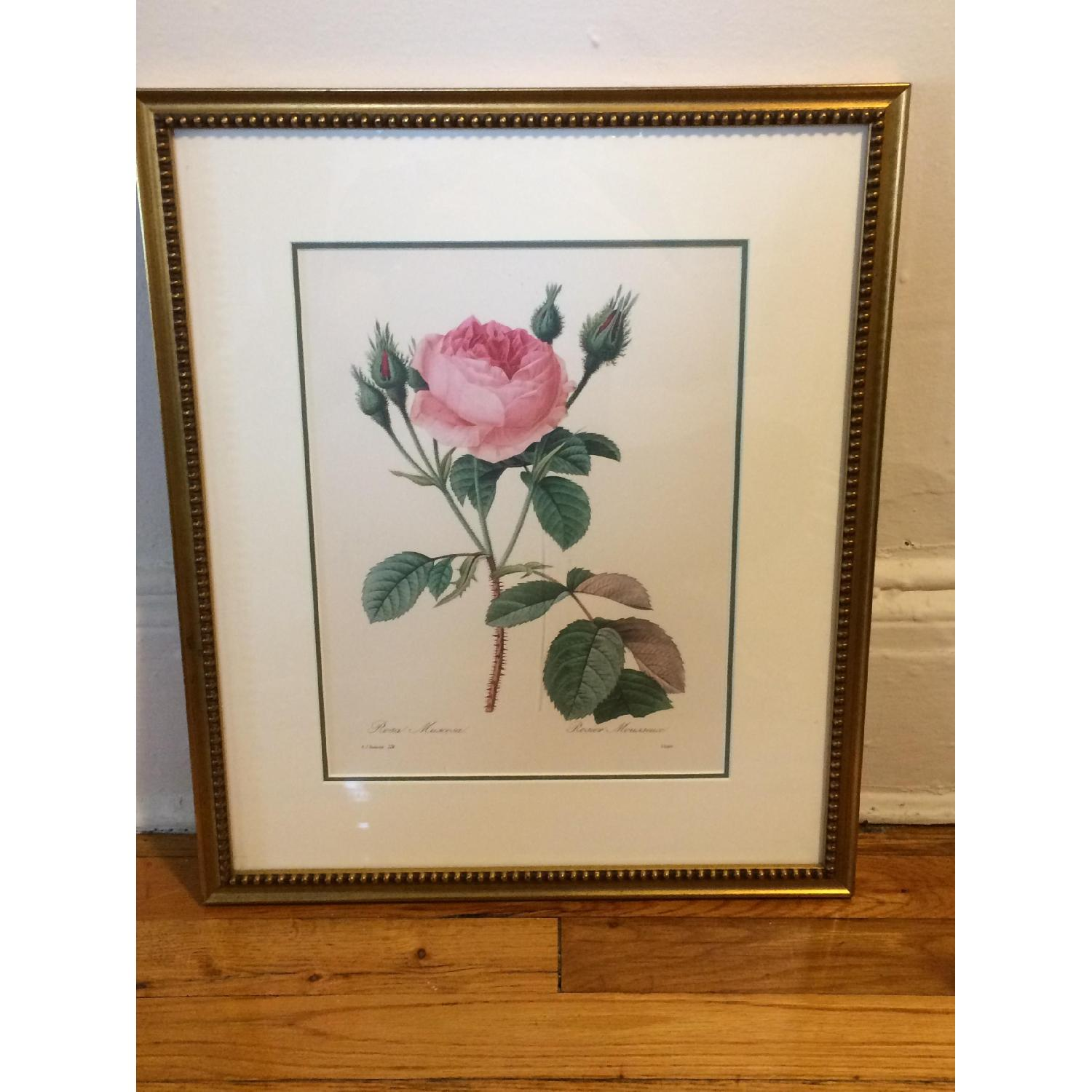 Pierre Joseph Redoute Framed Floral Lithograph - image-4