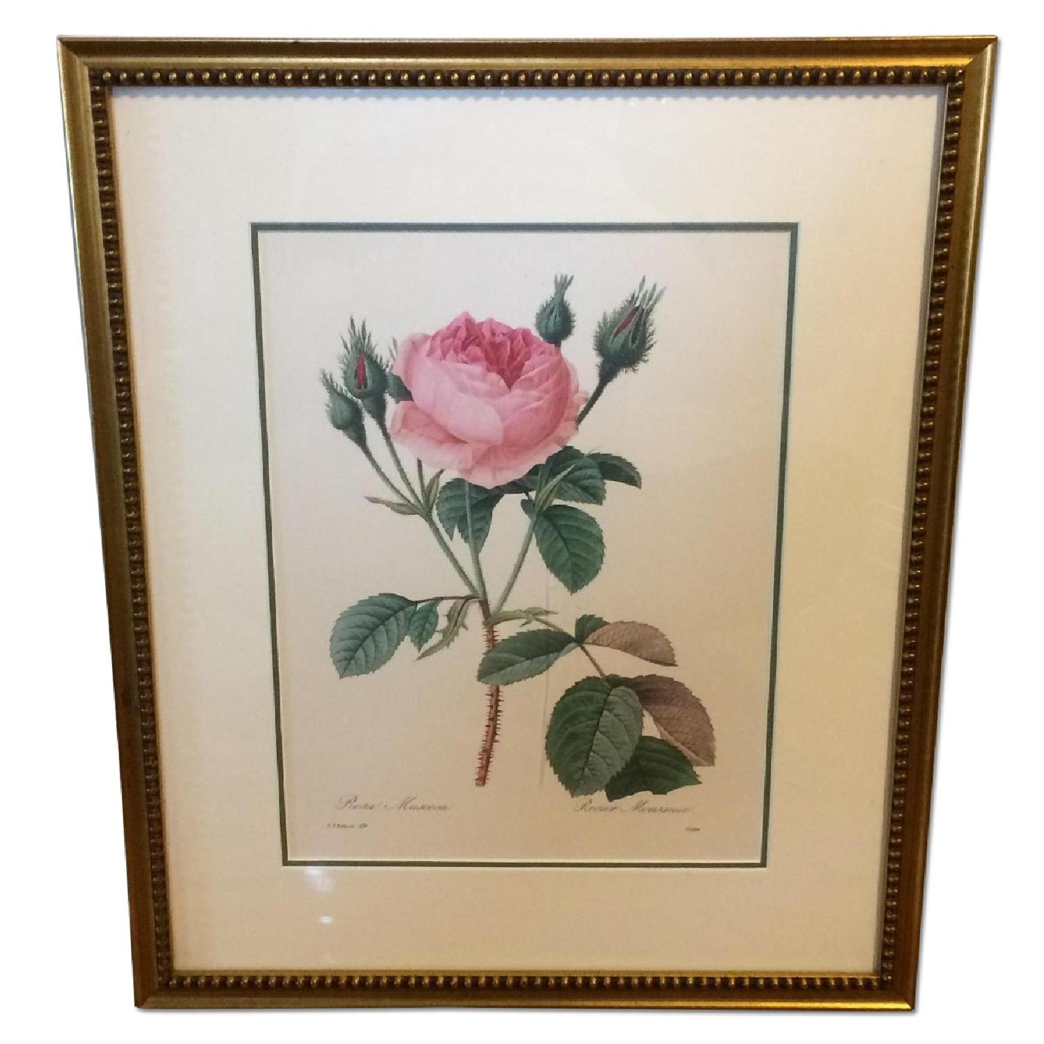 Pierre Joseph Redoute Framed Floral Lithograph - image-0