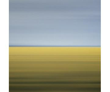 David Burdeny, Drift #11, Mustard Field, Carman, Canada