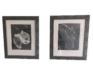 Framed Black & White Floral Photographs