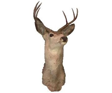 Vintage Taxidermy Deer