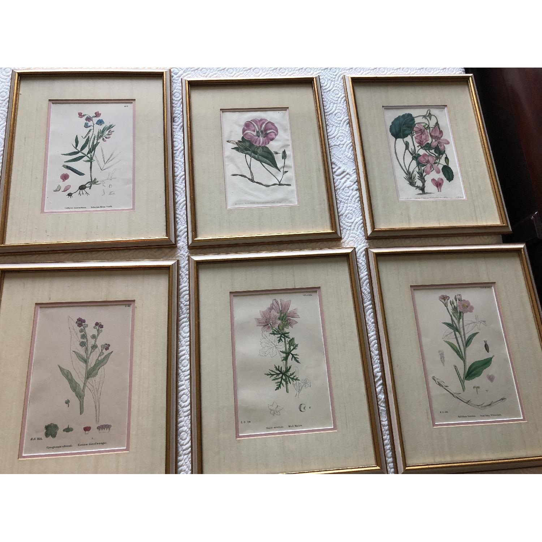 Vintage Early1800s Botanical Prints - image-1