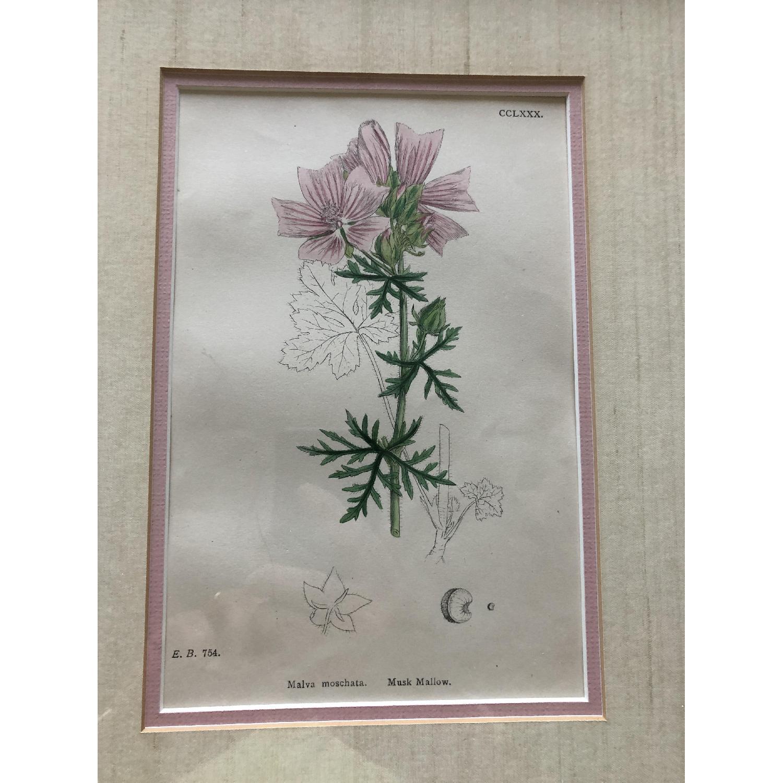 Vintage Early1800s Botanical Prints - image-2