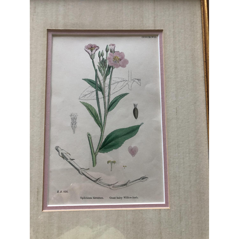 Vintage Early1800s Botanical Prints - image-3