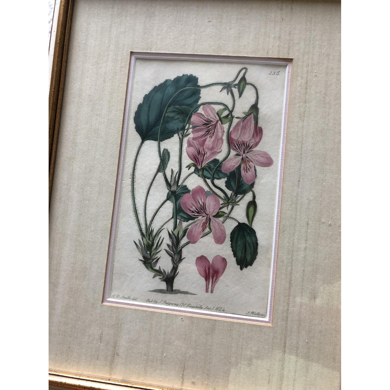 Vintage Early1800s Botanical Prints - image-4