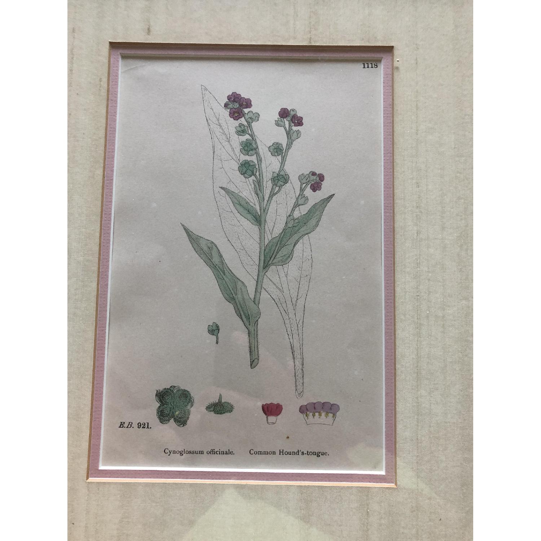 Vintage Early1800s Botanical Prints - image-5