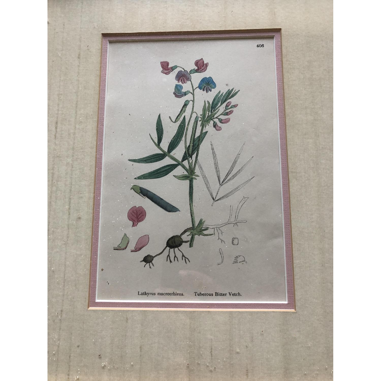 Vintage Early1800s Botanical Prints - image-6