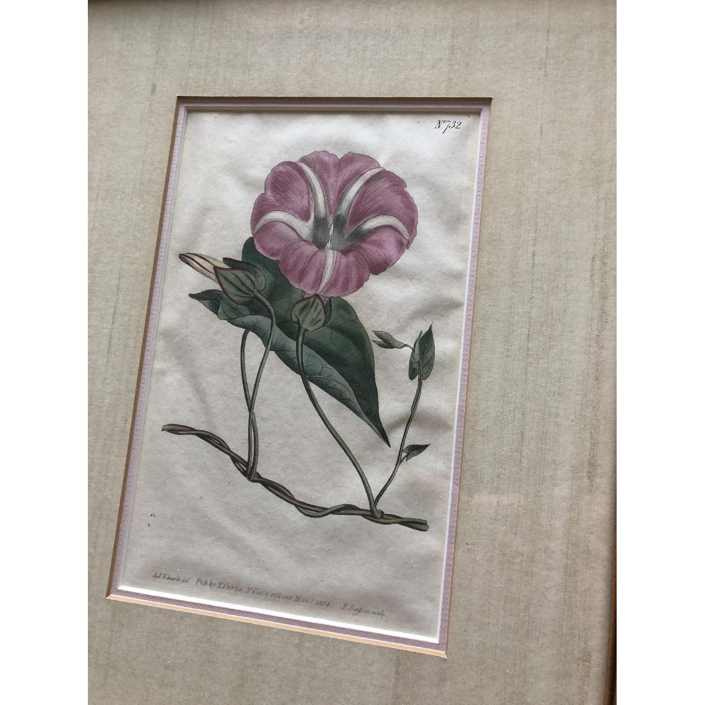 Vintage Early1800s Botanical Prints - image-7