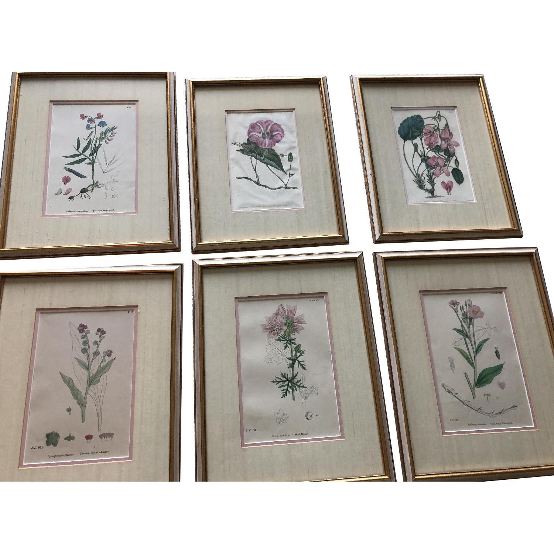 Vintage Early1800s Botanical Prints - image-0
