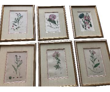 Vintage Early1800s Botanical Prints