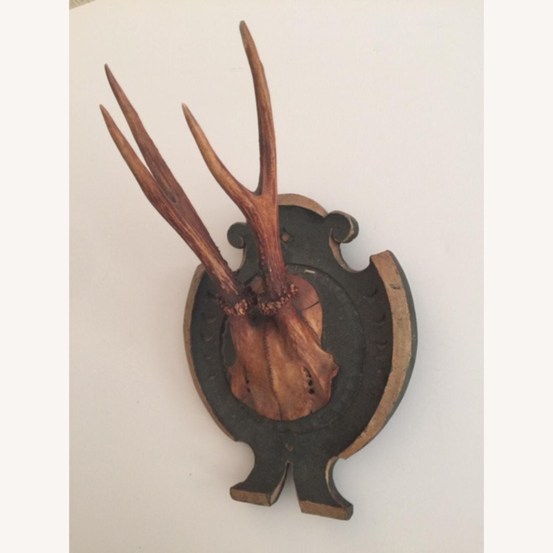 Vintage Deer Antlers Taxidermy Trophy Mount