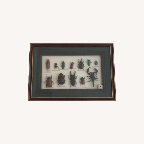 Used Insect Taxidermy Shadowbox for sale on AptDeco