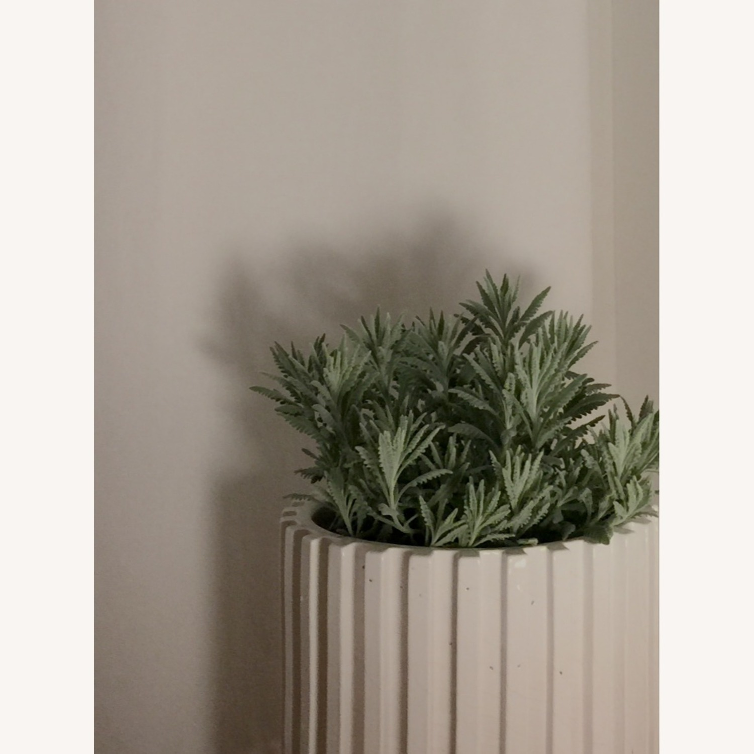 CB2 Lineal Large Planter - image-1