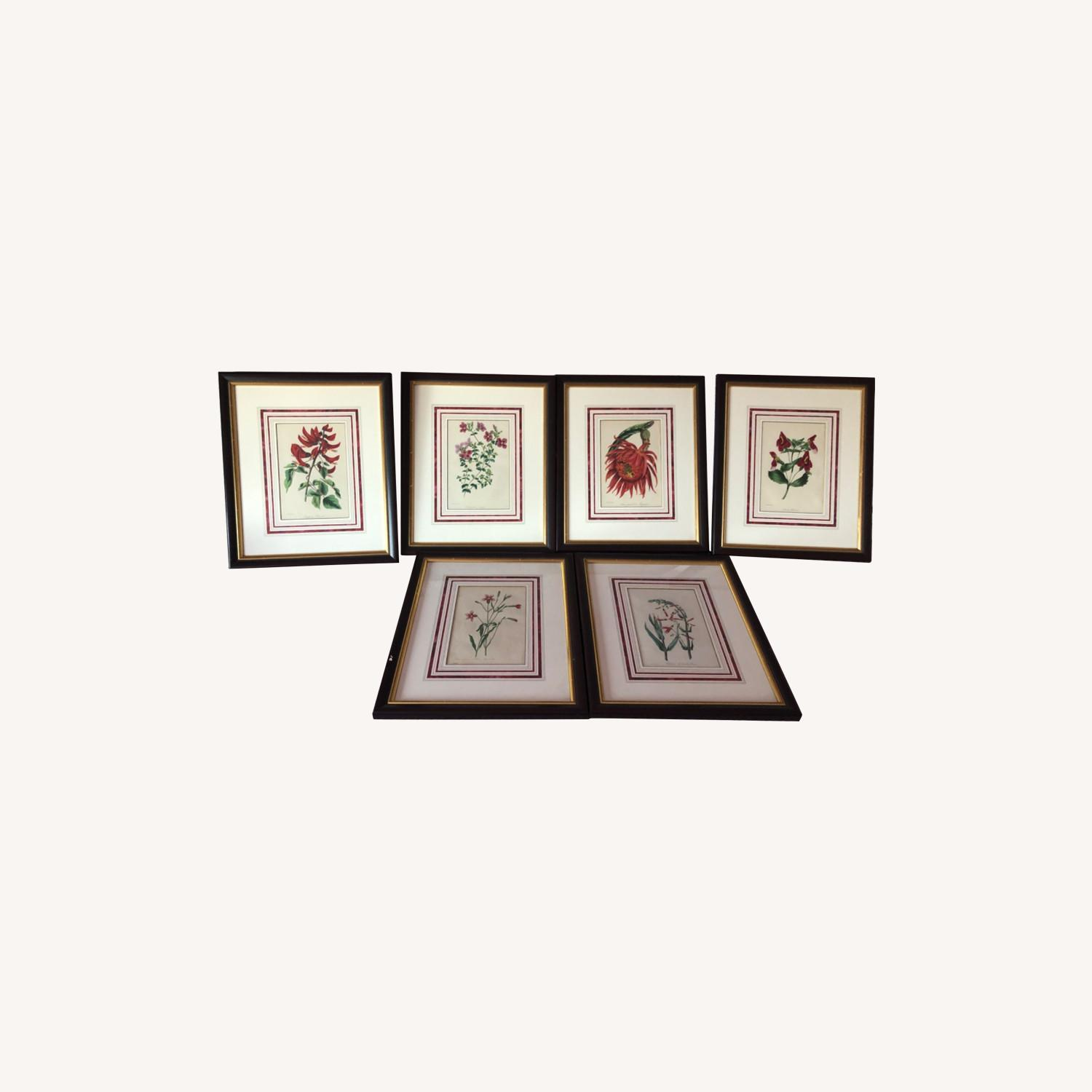 Six Botanical Prints from 1800s - image-0