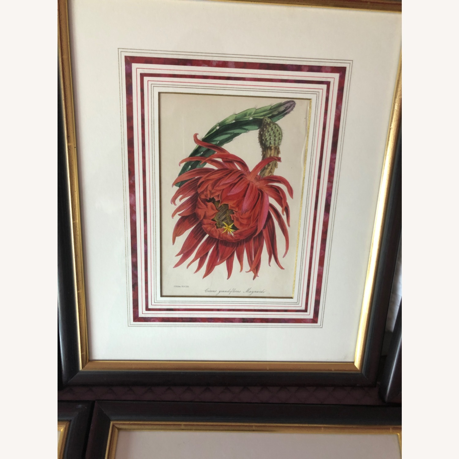 Six Botanical Prints from 1800s - image-4