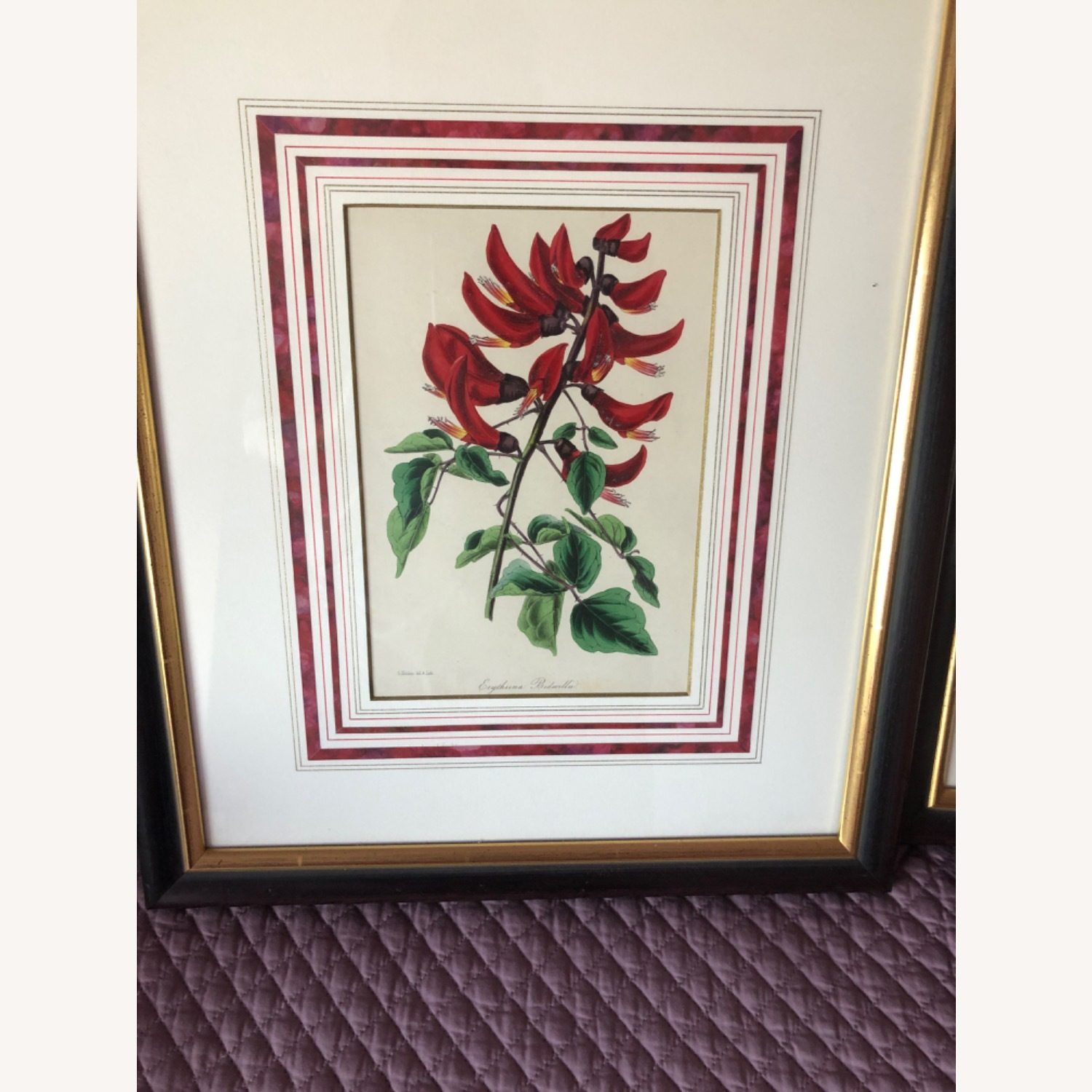 Six Botanical Prints from 1800s - image-2