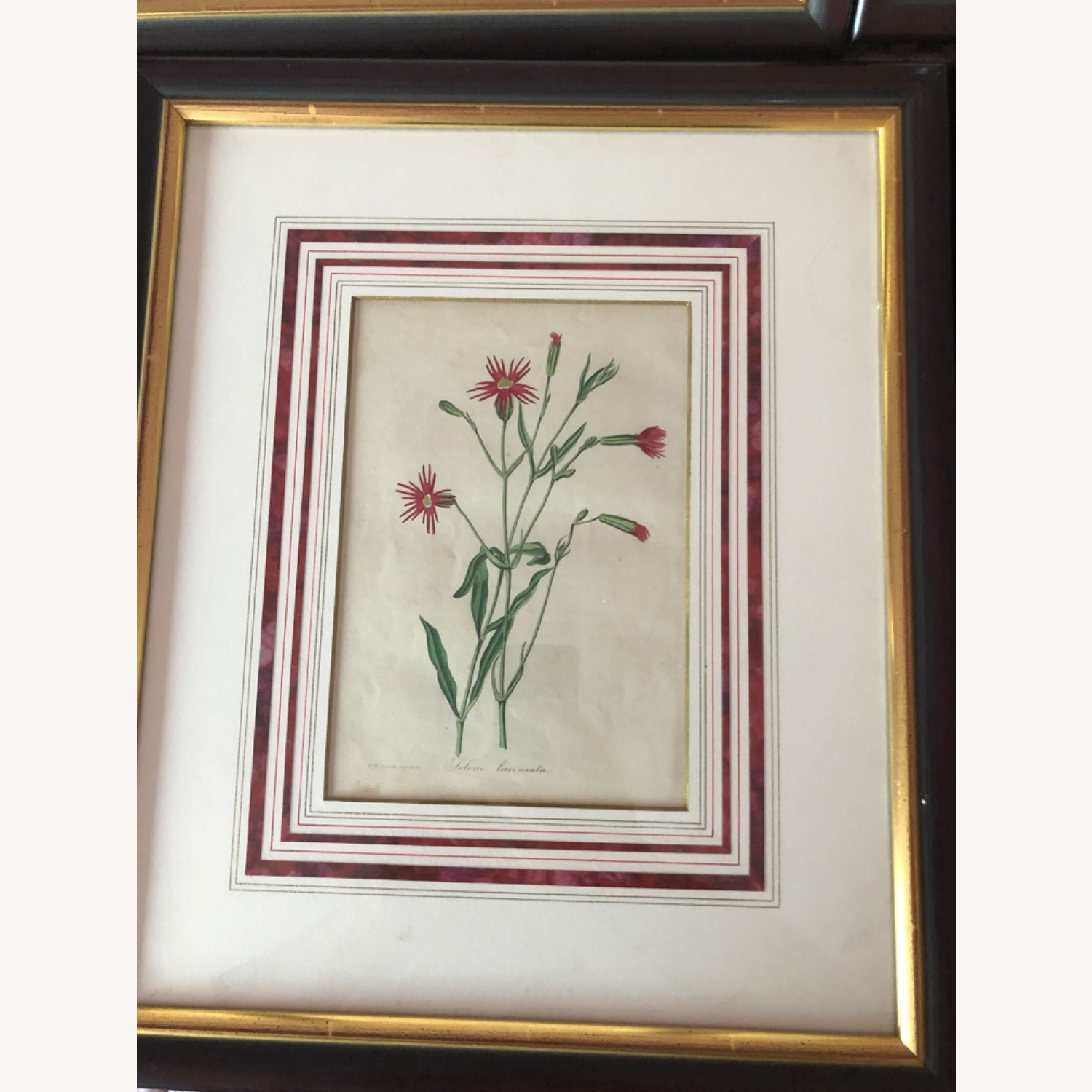 Six Botanical Prints from 1800s - image-8