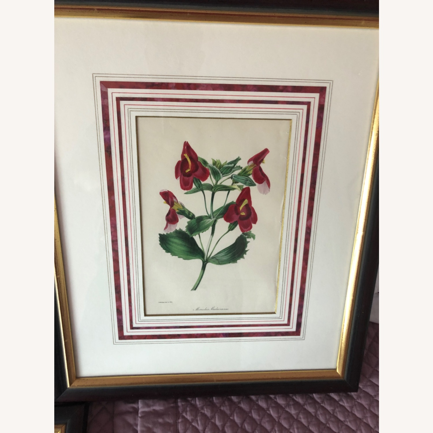 Six Botanical Prints from 1800s - image-5