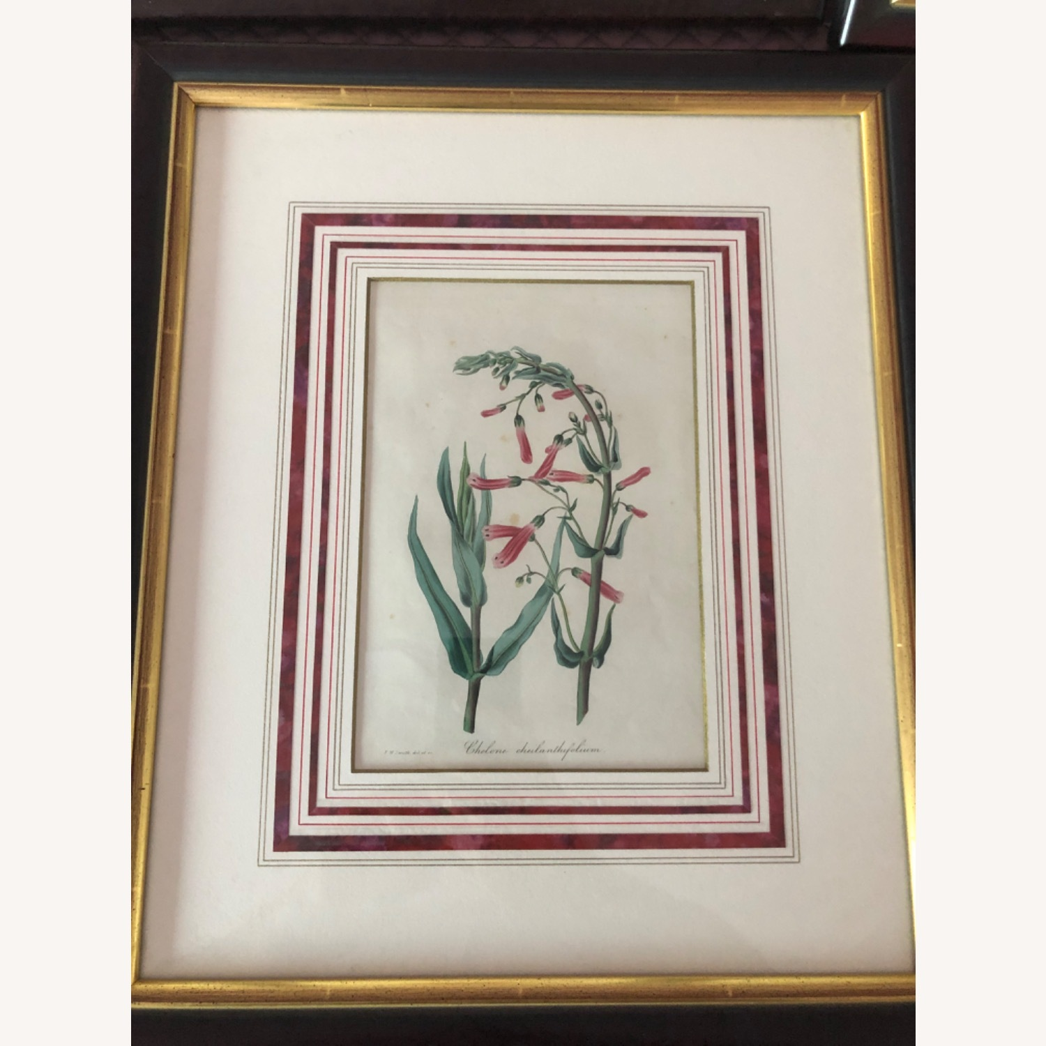 Six Botanical Prints from 1800s - image-6