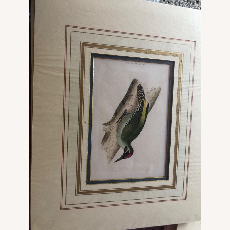 4 Antique Bird Prints - image-3