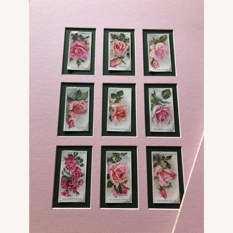 1912 Cigarette Cards Roses - image-8
