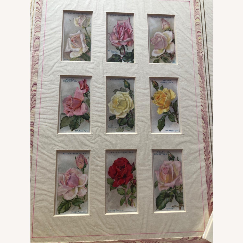 1912 Cigarette Cards Roses - image-3