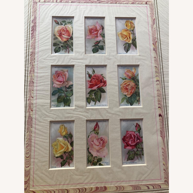 1912 Cigarette Cards Roses - image-2